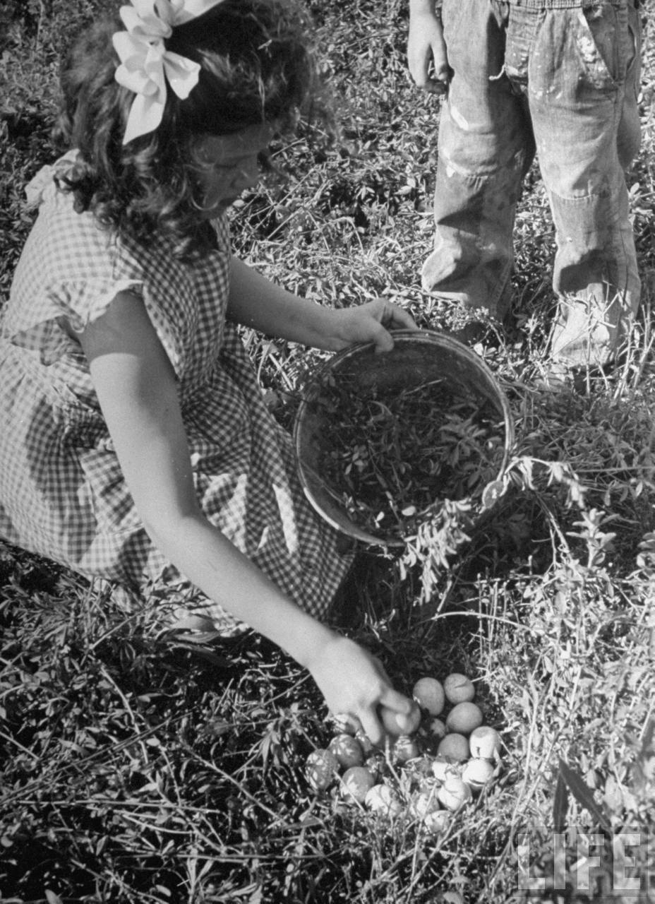 Close-up of girl collecting eggs from nest.