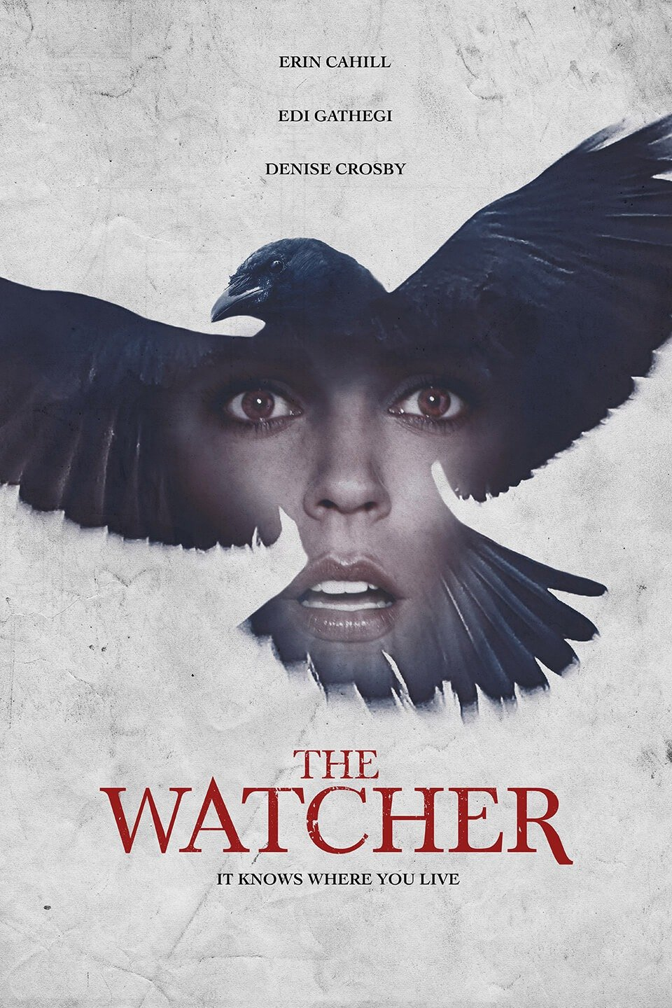 The Raven's Watch-The Watcher