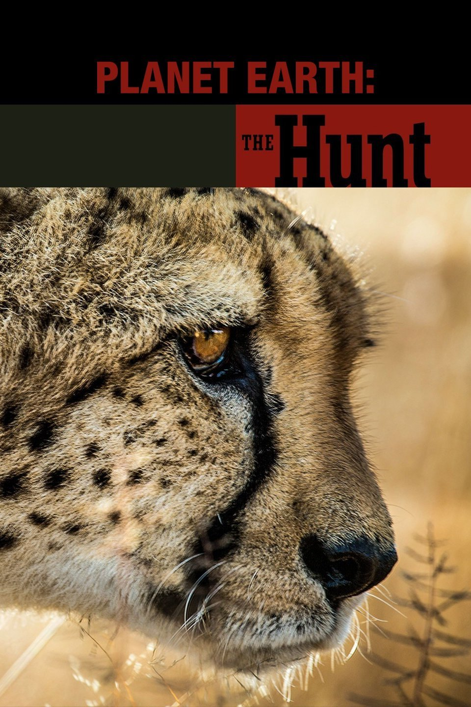 The Hunt-The Hunt BBC